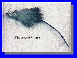 Arctic Mouse