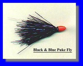 Black and Blue Puke Fly