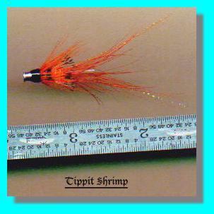 Tippit Shrimp