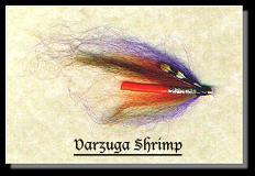 Varzuga Shrimp